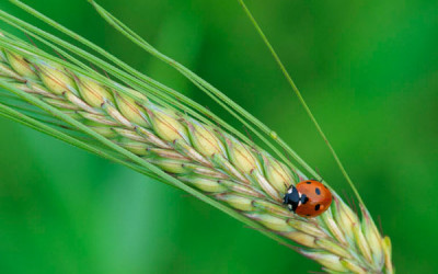 Wildlife to see in April – Ladybirds