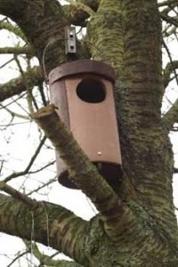 © David Beeson: BTO Woodcrete birdbox.