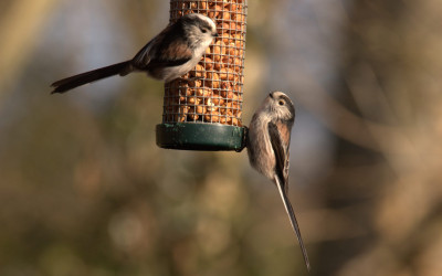 Which Type of Garden Bird Food to Use