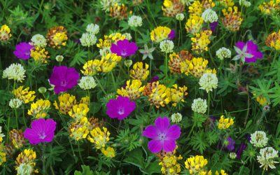 Make a mini-wildflower meadow