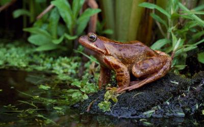 Wildlife Blogs – Wild Food Foraging