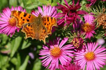 Wildlife Gardening in October