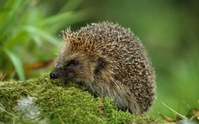 Wildlife Blogs – Vale Wildlife Rescue