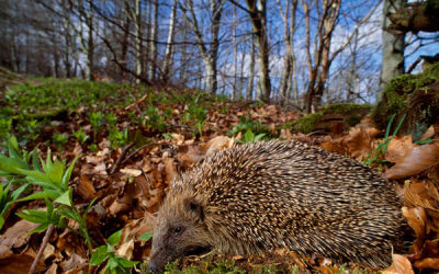 Wildlife to see in November – Hibernation