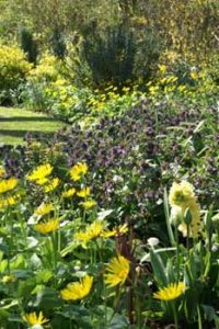 © David Beeson: The semi-traditional flower borders also provide good wildlife value. The pulmonarias and Skimmia japonica are very popular with our bumblebee species.