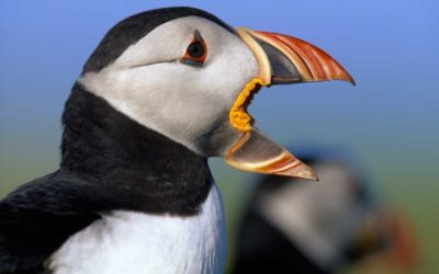 Wildlife to see in May – Seabird Colonies