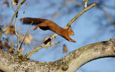 Wildlife to see in September – Squirrels